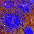 Sea Urchin 9 by Chris Taggart