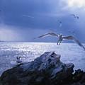 Seabird Flack by Benjamin Garvey