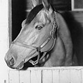 Seabiscuit 1933-1947, In His Stall by Everett