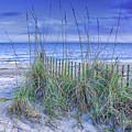 Seagrass And Sand by Carol Ward