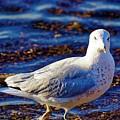 Seagull 1 by Jasmin Hrnjic
