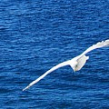Seagull 1 by John Hartman