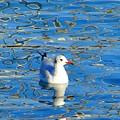 Seagull by Ana Maria Edulescu