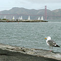 Seagull And Golden Gate Bridge by Masha Batkova