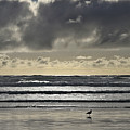 Seagull At Cannon Beach by Wes and Dotty Weber