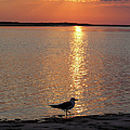 Seagull At Sunset by Charles Harden