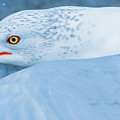 Seagull Departing Close-up by Jeff at JSJ Photography