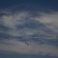 Seagull Enjoying The Heaven Skies by Chris W Photography AKA Christian Wilson
