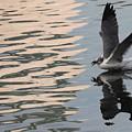 Seagull Fun by Carol Groenen