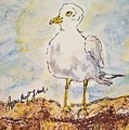 Seagull  by Geraldine Myszenski