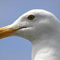 Seagull by Hans Jankowski