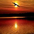 Seagull Homeward Bound by Carol F Austin