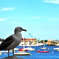 Seagull In Boston Harbor by Andrew Dinh
