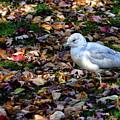 Seagull In The Fallen Leaves by Maria Keady