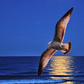 Seagull In The Moonlight by Peg Runyan