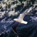 Seagull In Wake by Avalon Fine Art Photography