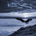 Seagull by Jaroslaw Grudzinski