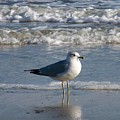 Seagull  by Kathy Shoemaker