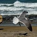 Seagull Landing Hutchinson Island, Fl by Colleen Fox