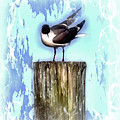 Seagull - Laughing Gull Pop Art  by HH Photography of Florida