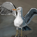 Seagull by Lori Wadleigh