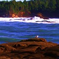 Seagull On Rock by Shelley Bain