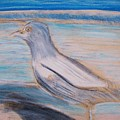 Seagull  On Seashore by Eric  Schiabor