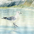 Seagull On The Beach by Melly Terpening