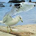 Seagull On The Beach by Nina Bradica