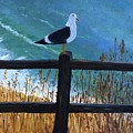 Seagull On The Fence by Jessie Lofland