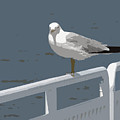 Seagull On The Rail by Michelle Calkins