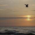 Seagull Over Atlantic Ocean At Sunrise by Darrell Young