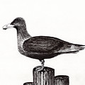 Seagull Portrait On Pier Piling E3 by Ricardos Creations