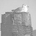 Seagull Resting by Barbara Henry