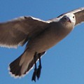 Seagull Sees Me by Daniele Smith