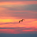 Seagull Silhouette by Gayle Miller