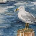 Seagull by Siona Koubek