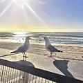 Seagull Sonnet  by Az Jackson