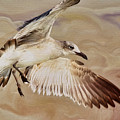 Seagull Swirl by Deborah Benoit