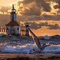 Seagull Takeoff - Tiscornia Beach  by Molly Pate