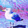 Cool And Colorful Gull by Expressionistart studio Priscilla Batzell