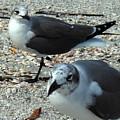 Seagulls #3 by Bonita Barlow