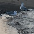 Seagulls by Amanda Kessel