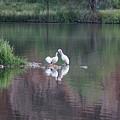 Seagulls At Lake by Susan Brown
