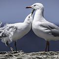 Seagulls by Chris Cousins