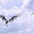 Seagulls by Claudia Moeckel