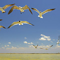 Seagulls by Elisa Locci