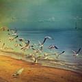 Seagulls Flying by Istvan Kadar Photography