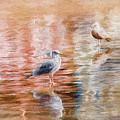 Seagulls - Impressions by Susie Peek