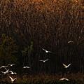 Seagulls In Flight by Elizabeth Winter